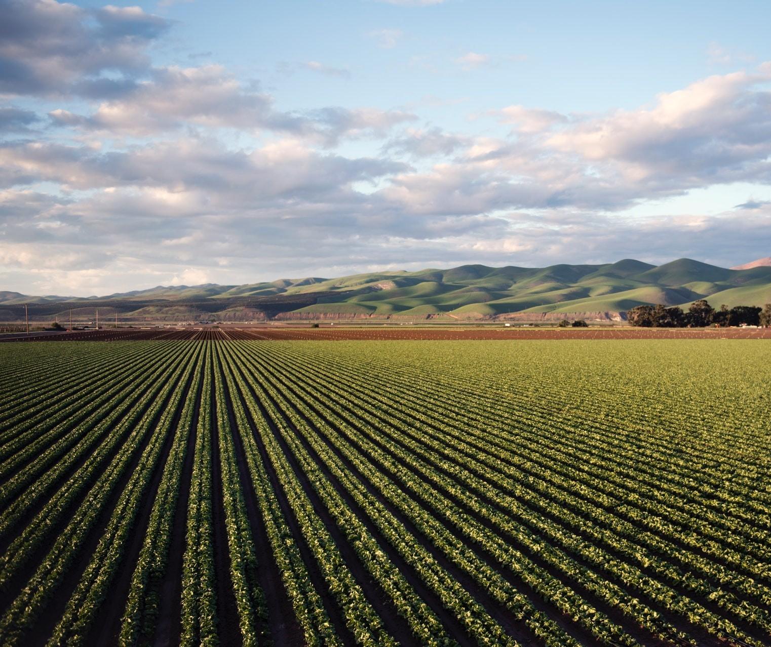 Crédito Rural: Em dois meses, produtores contratam R$ 48,9 bilhões do Plano Safra