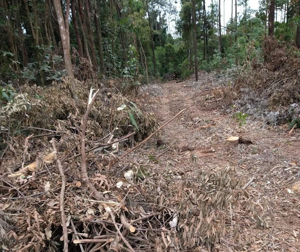 Duas pessoas são presas por desmatamento de reserva legal