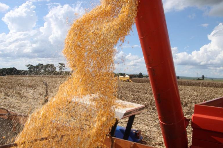 Colheita da safra de verão de milho atinge 97% da área estimada