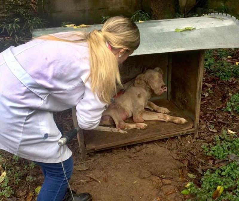 Curso capacita protetores de animais para atender denúncias de maus-tratos