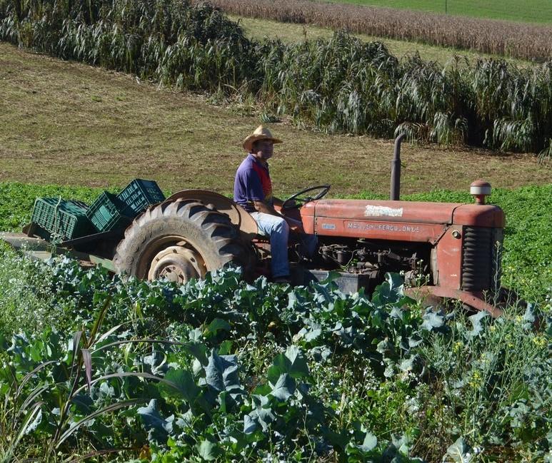 Agricultura familiar é responsável pela renda de 40% da população brasileira