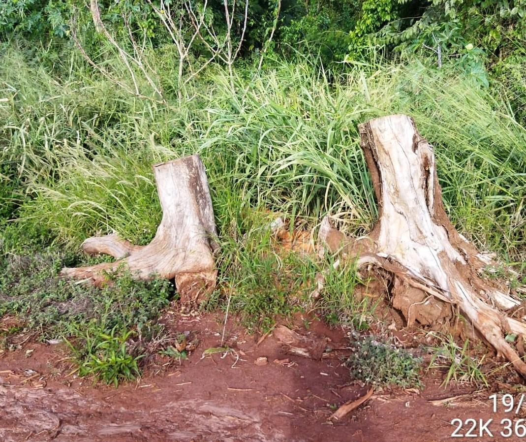 Agricultor é multado por desmatamento e descarte irregular de embalagens de agrotóxicos