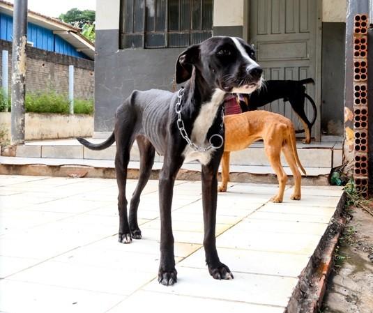 Cães são resgatados após denúncia de maus-tratos e morador é multado em R$ 6 mil