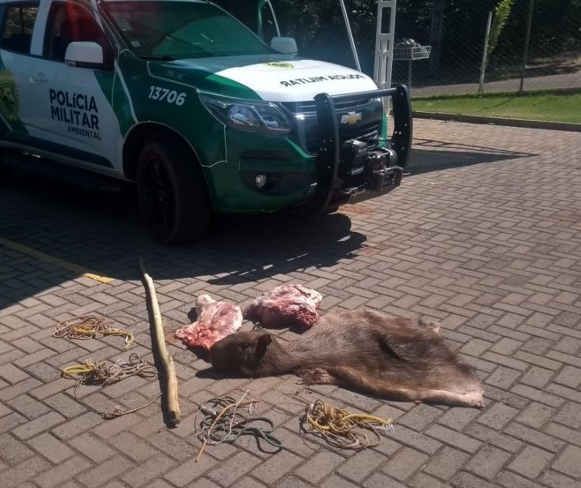 Com caça ilegal, consumo de animais silvestres coloca saúde em risco