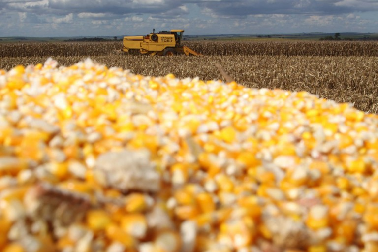 Colheita de milho segunda safra atrasa nos primeiros dias de junho