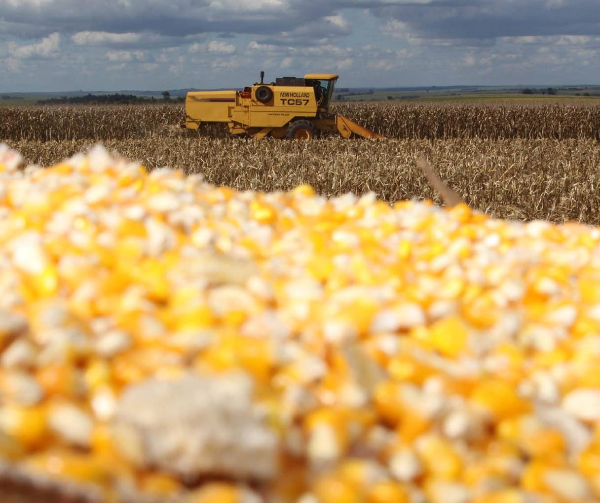 Deral reduz projeção de colheira da 2ª safra de milho