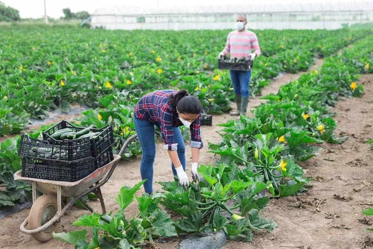 Agropecuária registra melhor saldo de empregos desde 2011