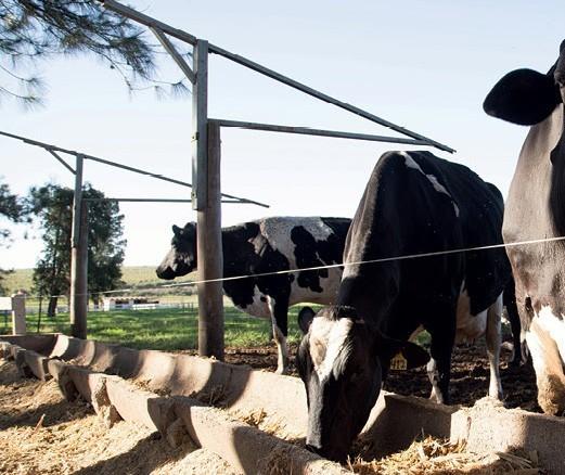 Mercado de nutrição animal cresceu 2,4% nos últimos cinco anos