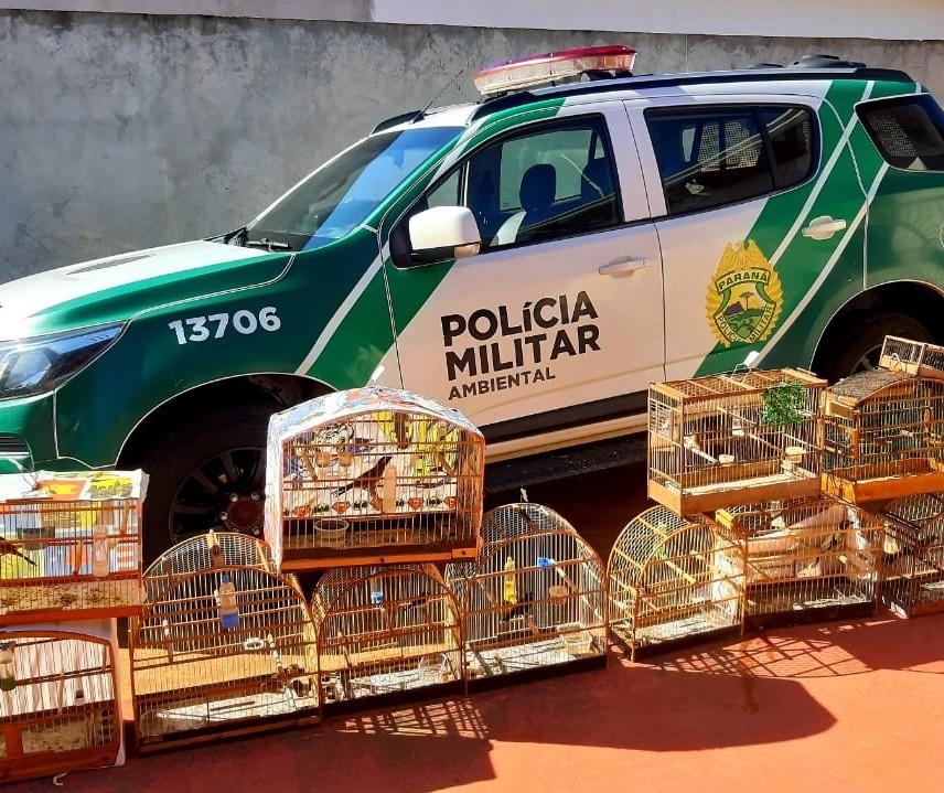 Polícia Ambiental apreende 114 aves nativas que estavam irregularmente em cativeiro