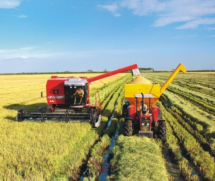 Áreas da lavoura de arroz diminuíram no Brasil