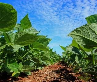 Plantação da soja avança no Paraná