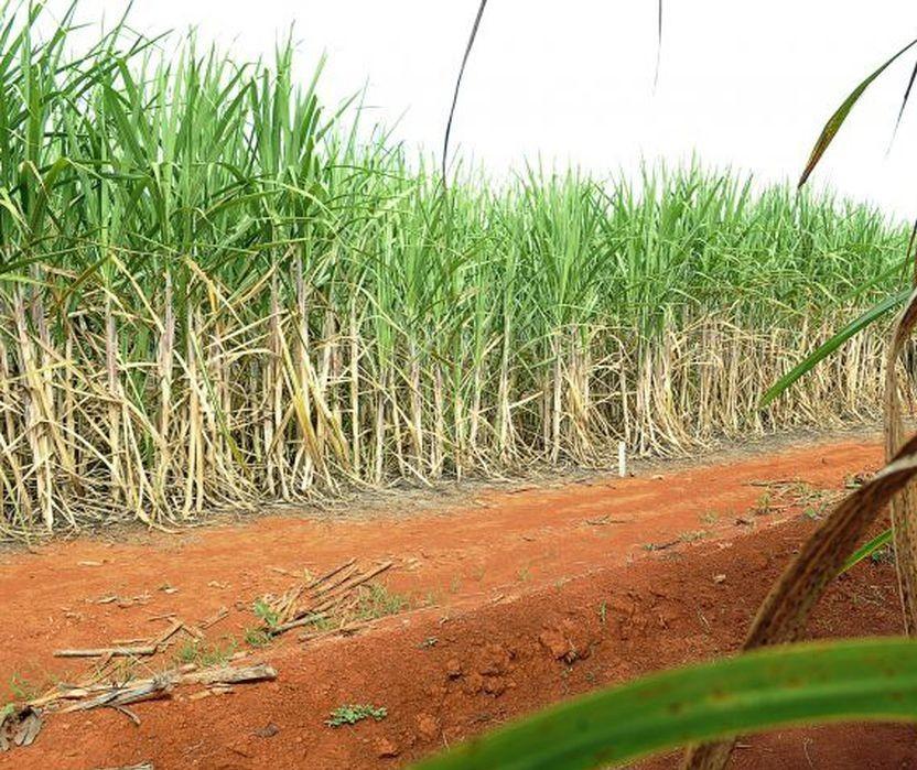 Em safra que pode ser mais curta, Paraná aumenta o etanol agora, mas ao final voltará a ser açucareiro
