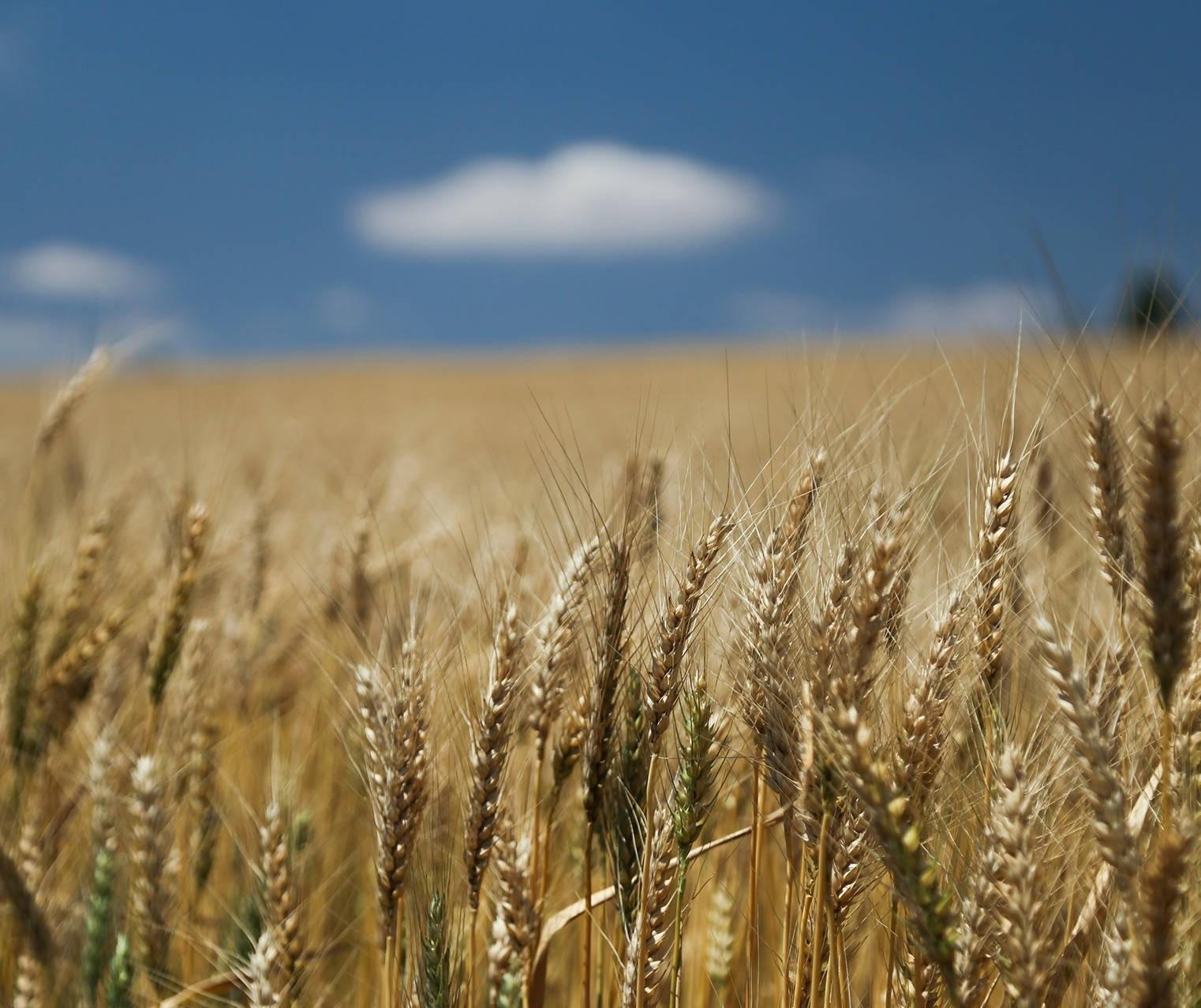 Frente fria provoca mudanças na agricultura em todo o Paraná