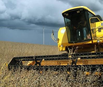 Colheita da soja no Paraná atinge 42% da área total semeada no estado