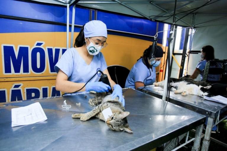 277 cães e gatos são castrados no Castra Móvel do Governo do Paraná em Iguatemi