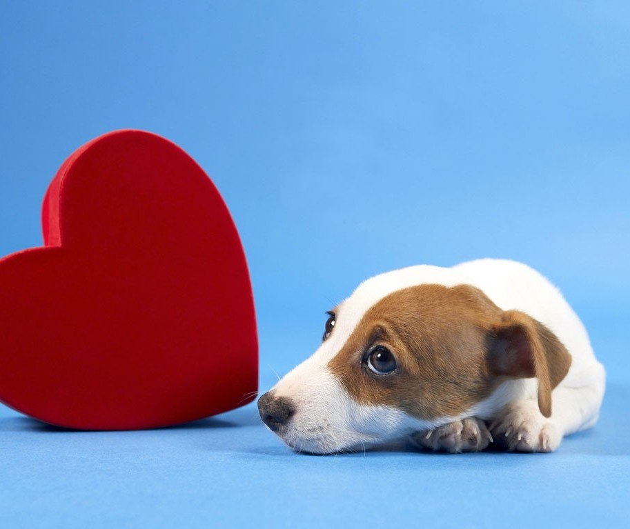 Atenção às doenças cardíacas em pets
