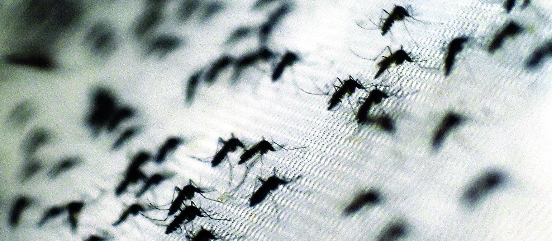 Paraná receberá novo inseticida para combater a dengue