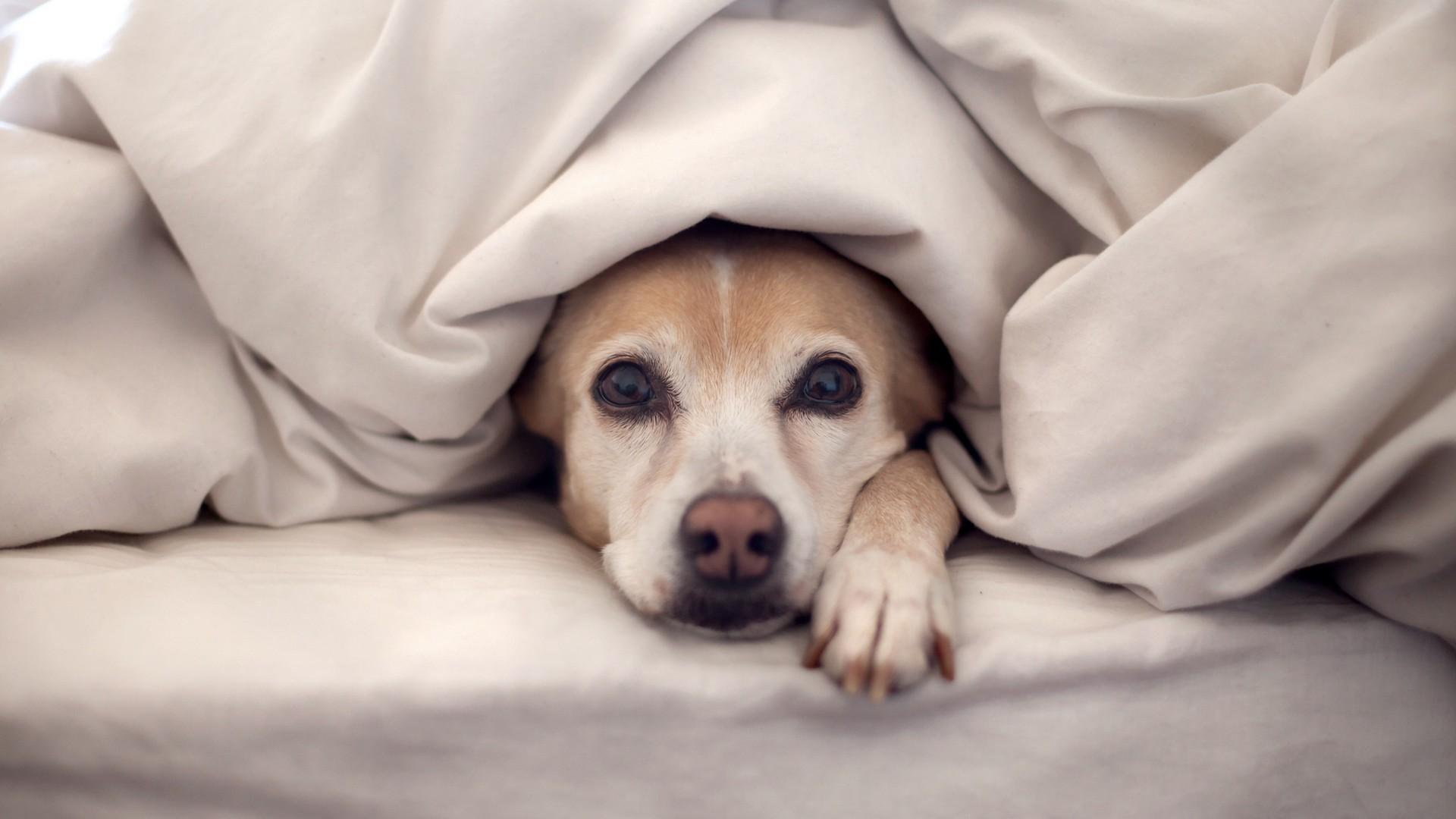 Cuidados necessários para proteger os animais do frio