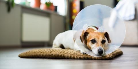 Como manter o peso dos cachorros após a castração?