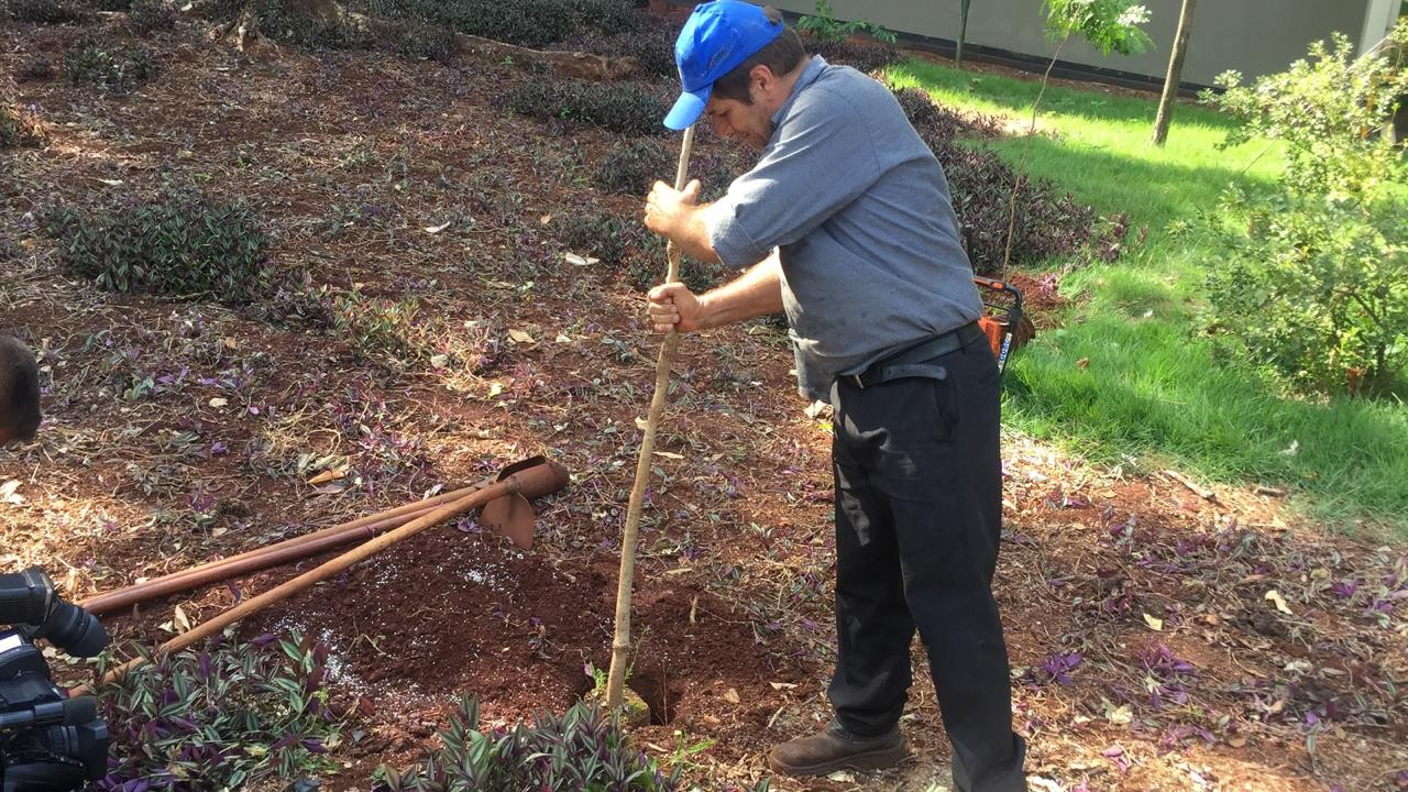 UEM faz replantio em compensação as dez árvores que 'sumiram' do câmpus
