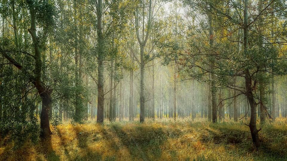 21 de setembro, o Dia da Árvore