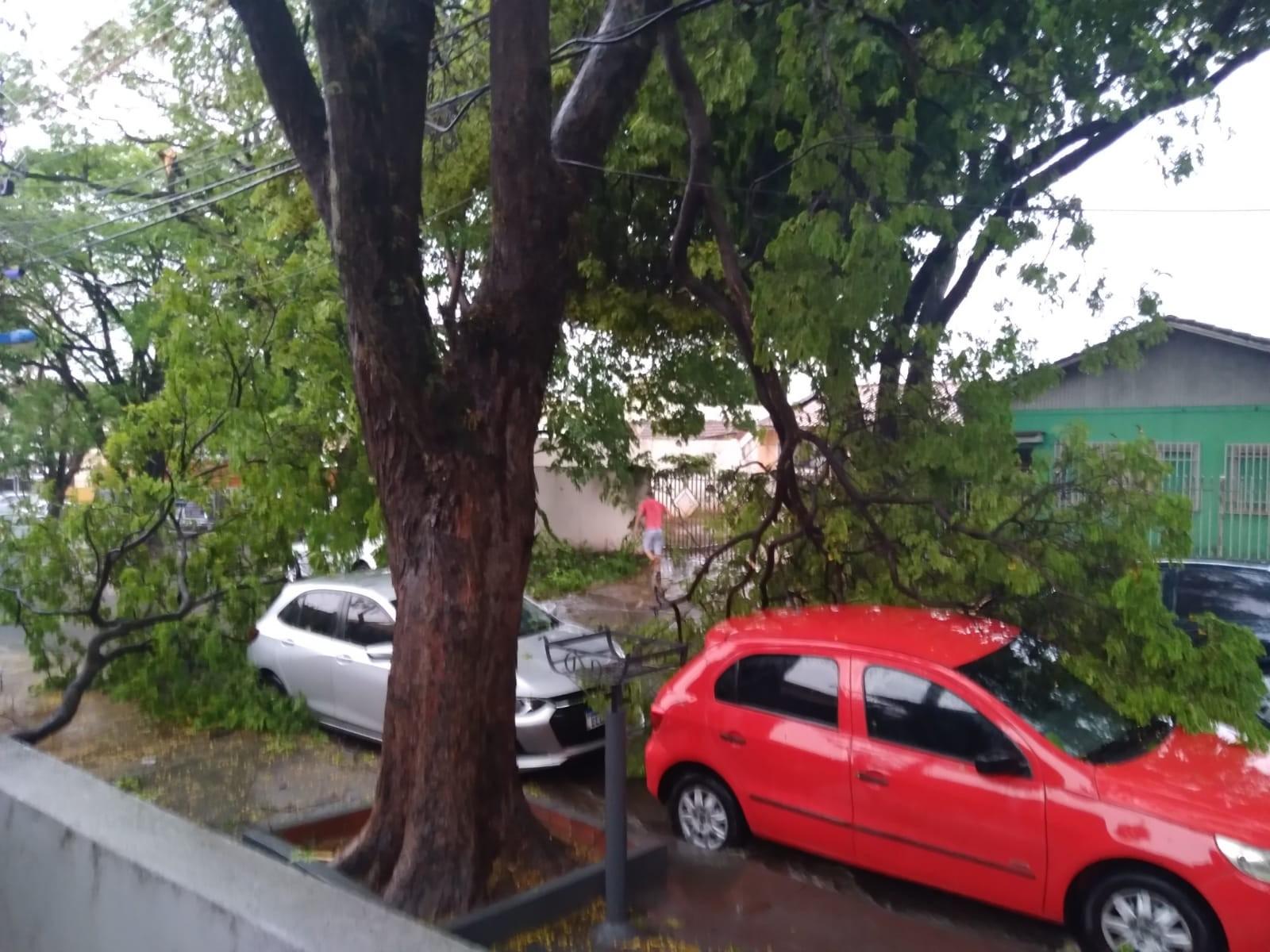 Na Rua Uruguai, no Jardim Alvorada, galhos de uma árvore antiga caíram e deixaram estragos (Fotos enviadas pelo ouvinte Rogério Gonçalves)