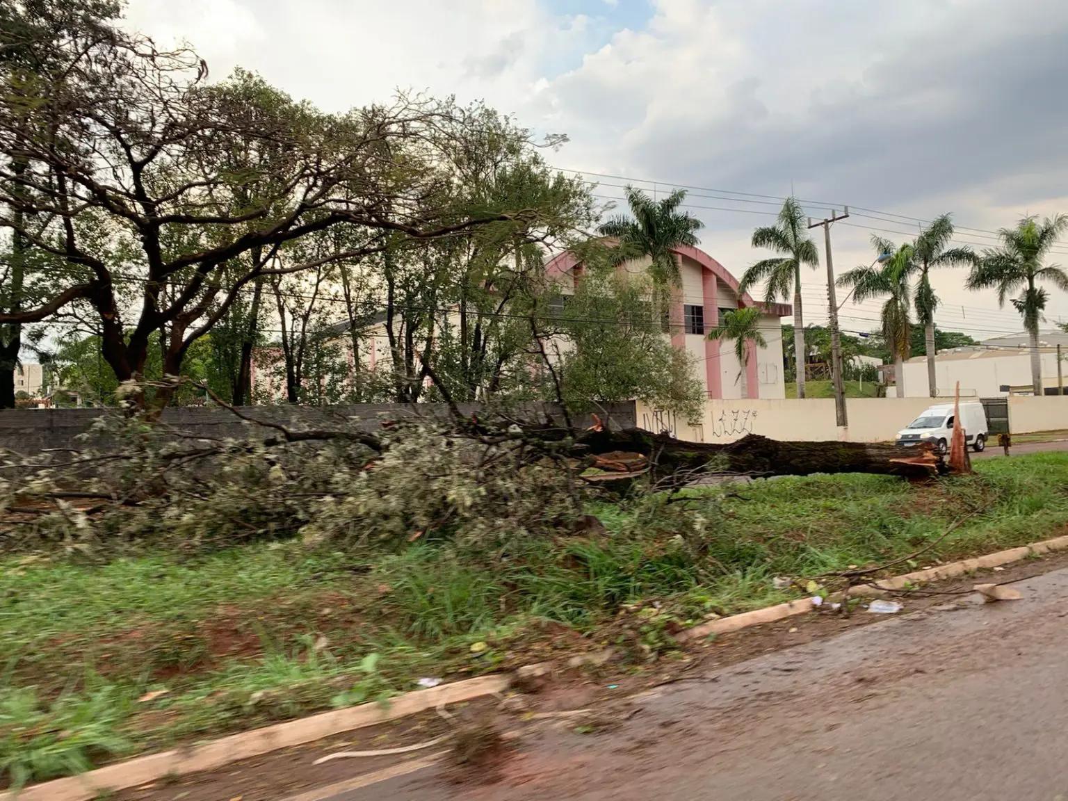 O temporal derrubou árvores no Jardim Alvorada, em Maringá. Foto: Fábio Guillen/GMC Online