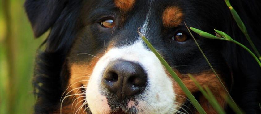 Confira os benefícios da castração em pets