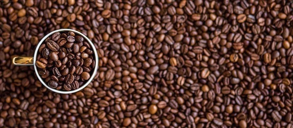 Café em coco custa R$ 6 kg na região de Maringá