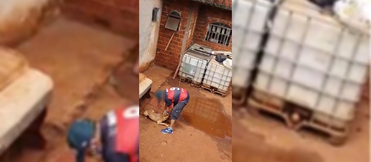 Homem é preso por torturar cães em Maringá