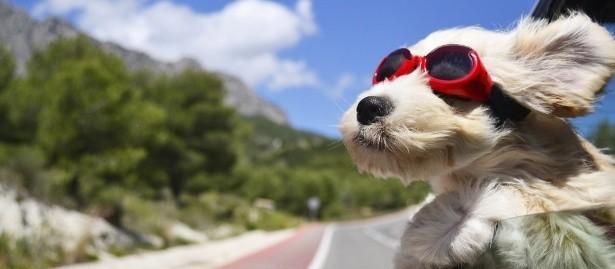 Férias com o pet: alguns cuidados que você precisa tomar antes de viajar