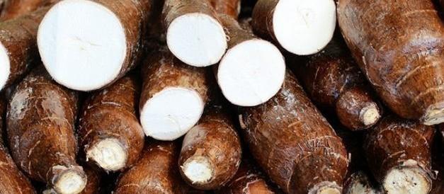 Raiz de mandioca custa R$ 290 a tonelada em Campo Mourão