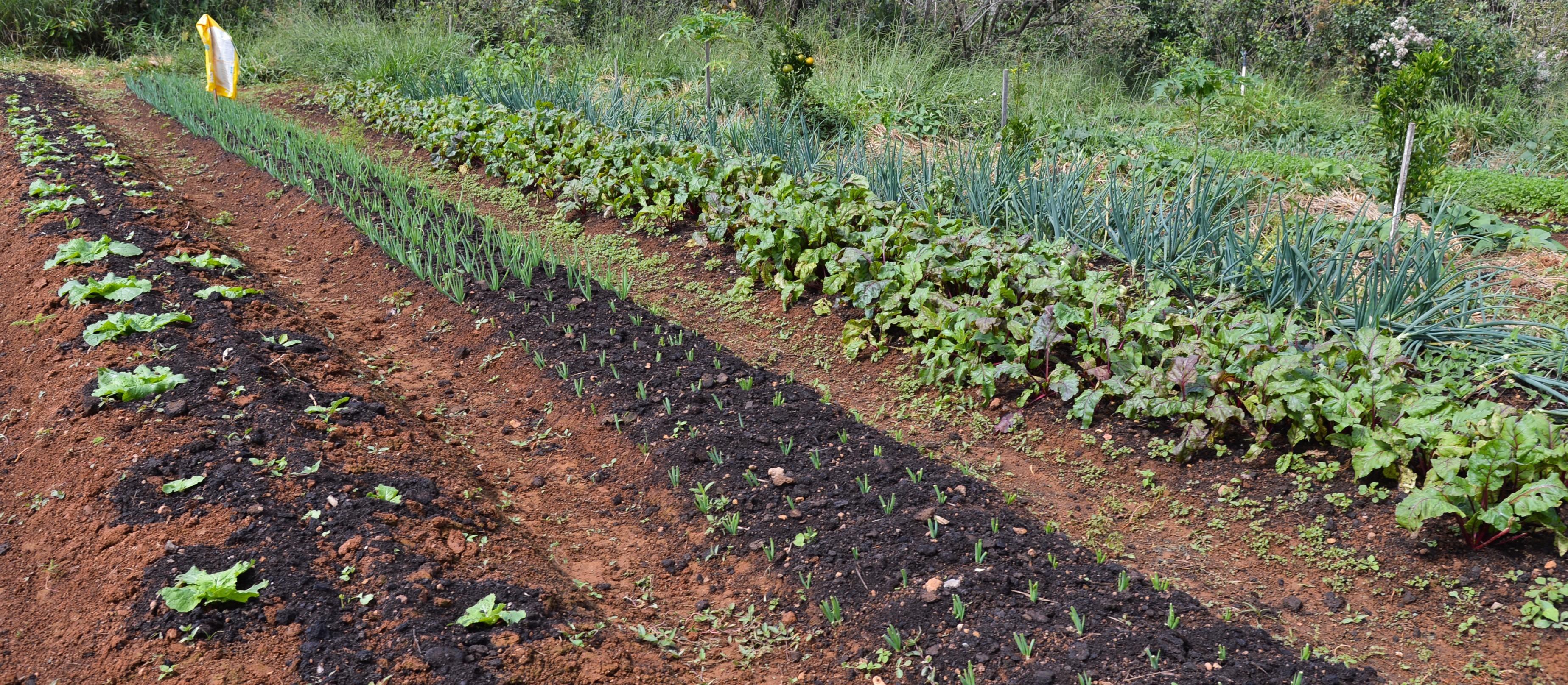 Elevação de preço das matérias-primas aumenta custos da nutrição vegetal