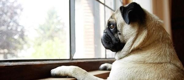 Vou viajar e não posso levar meu pet. O que fazer?