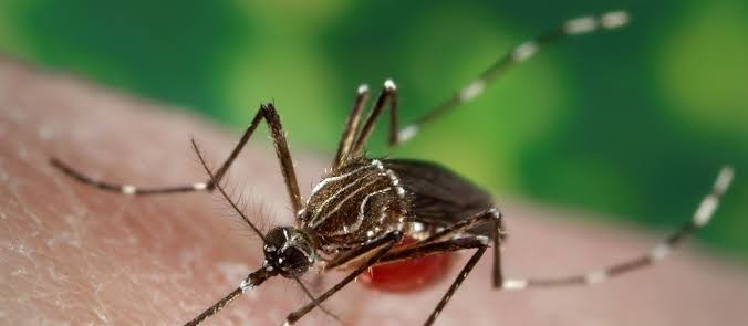 Além de Uniflor, Floraí também enfrenta epidemia de dengue