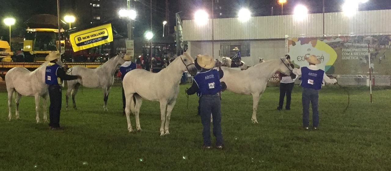 Cavalo Pantaneiro participa da Expoingá pela primeira vez