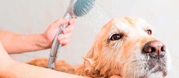 Confira os procedimentos para banho e tosa em época de frio