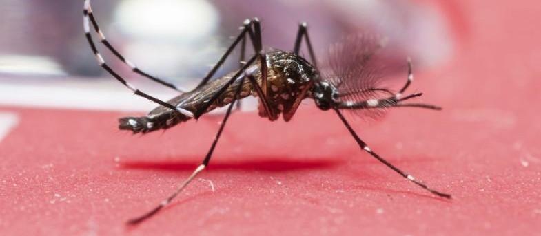 Saúde confirma 2º caso de chikungunya em Maringá
