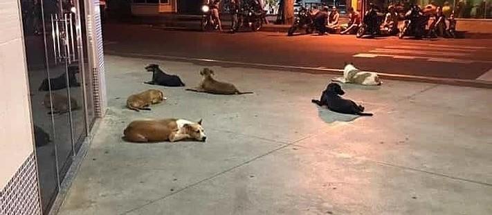 Morador de rua que ficou famoso por causa da vigília de cães na porta de um hospital, morre em Cianorte