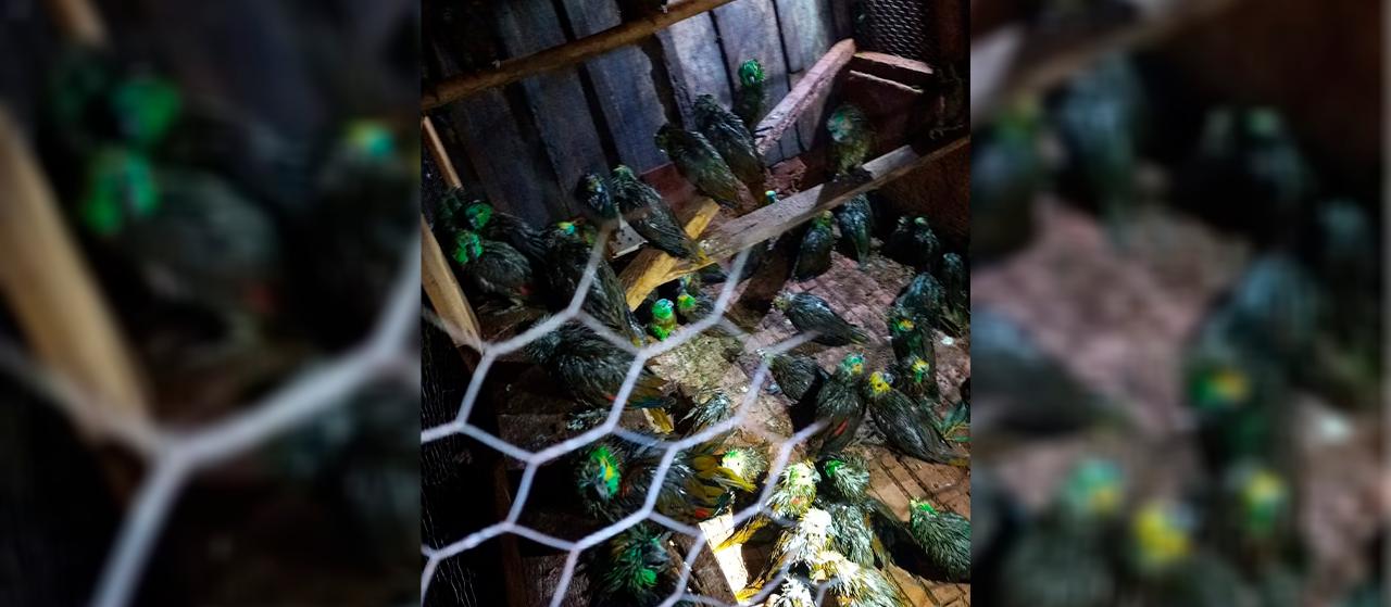 Tempestade de granizo mata papagaios e deixa centenas feridos
