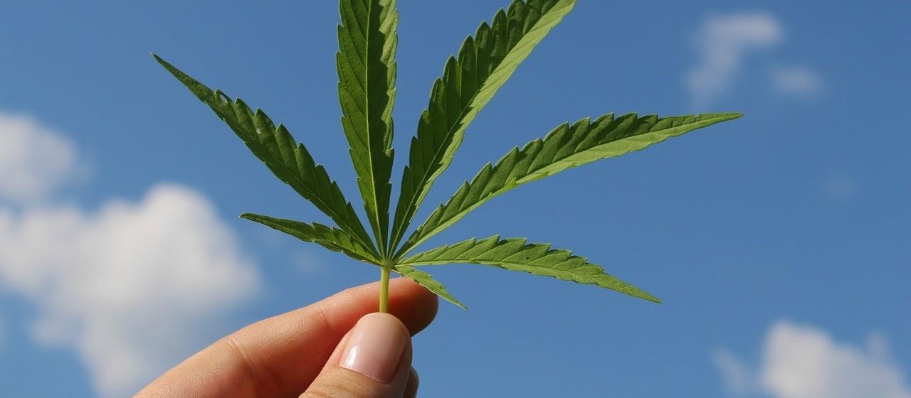 Cannabis medicinal pode auxiliar no tratamento de sequelas da Covid-19
