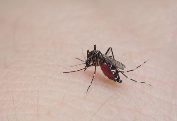 Secretaria de Saúde confirma primeiro caso de chikungunya em Maringá