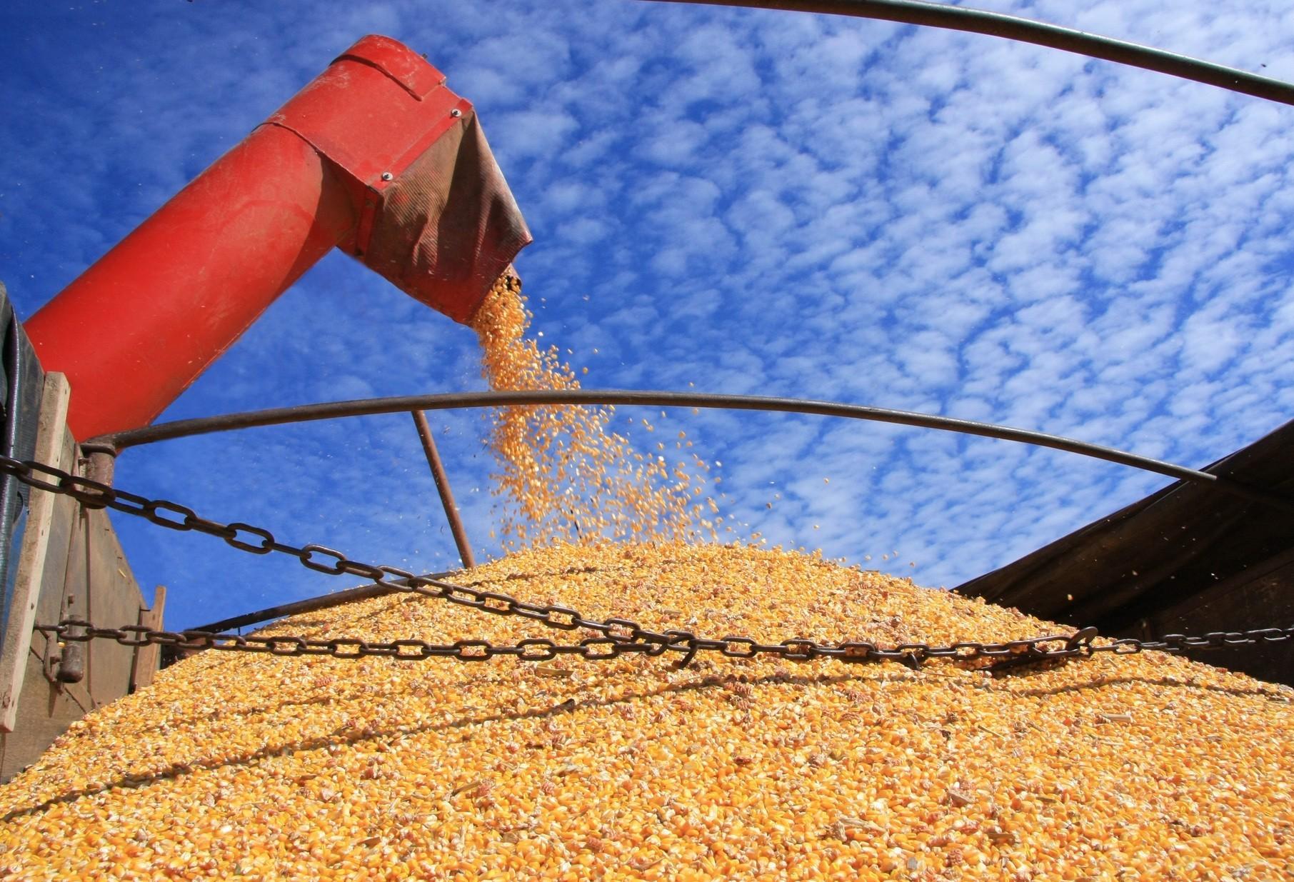Exportação de soja deve cair 17,8% neste ano