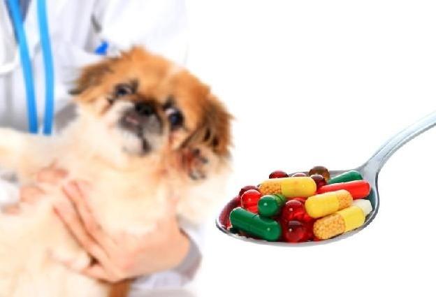 Núcleo Setorial de Médicos Veterinários debate estratégias para combater o uso indiscriminado de medicamentos