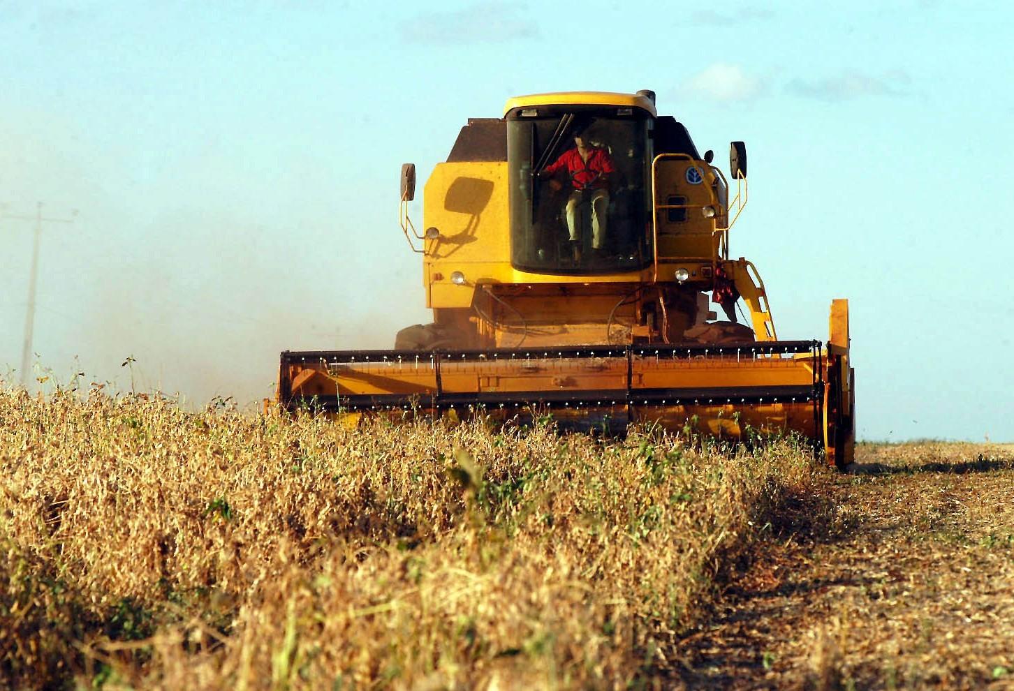 Safra da soja do Paraná deve alcançar 16,25 milhões de toneladas, projeta Deral