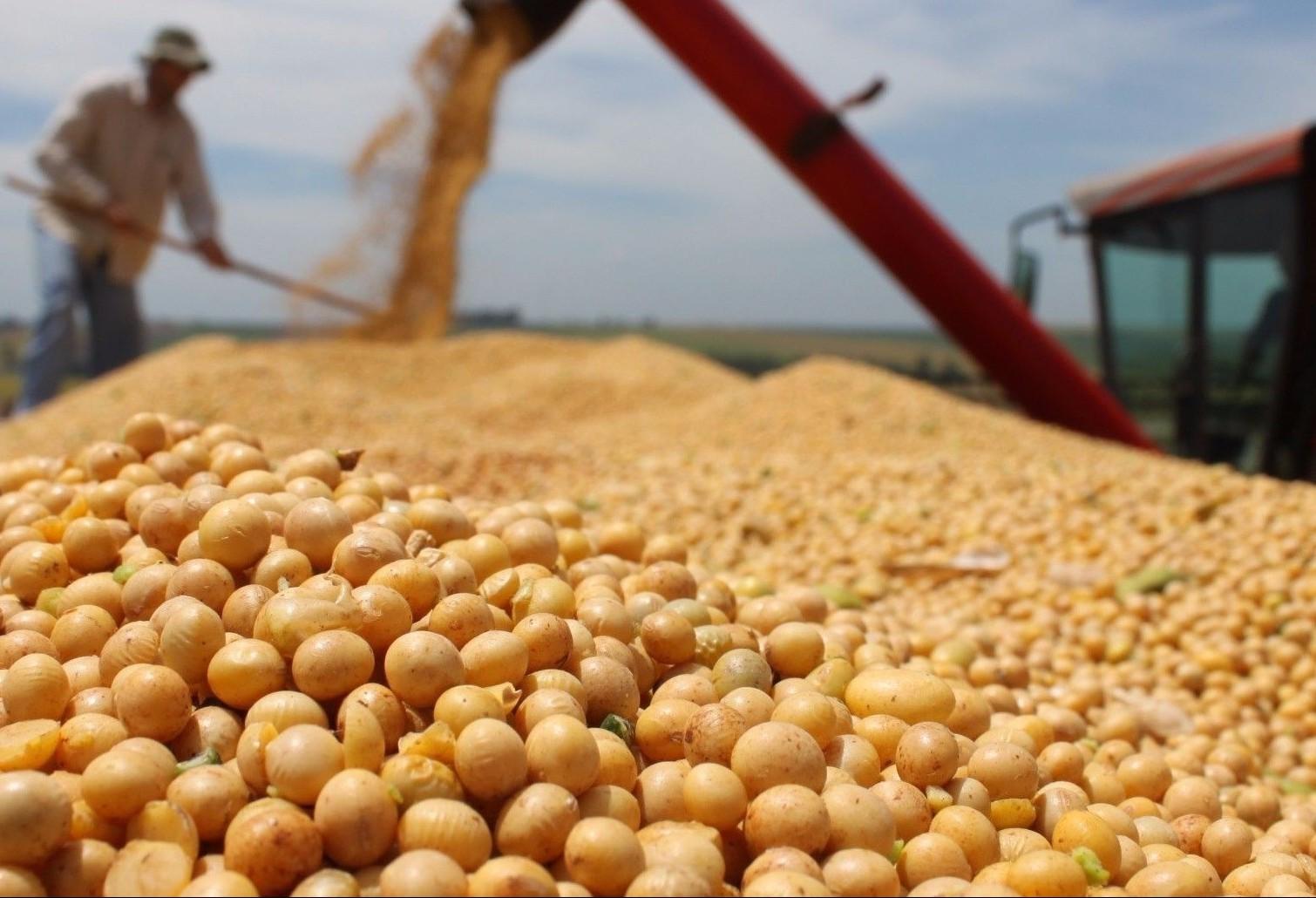 Aumento do dólar leva esmagadoras a comprarem mais soja