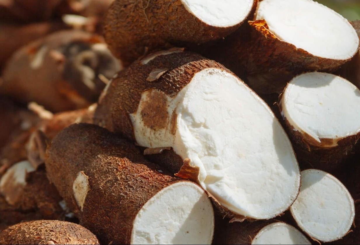 Tonelada da raiz de mandioca custa R$ 310 em Umuarama e Campo Mourão
