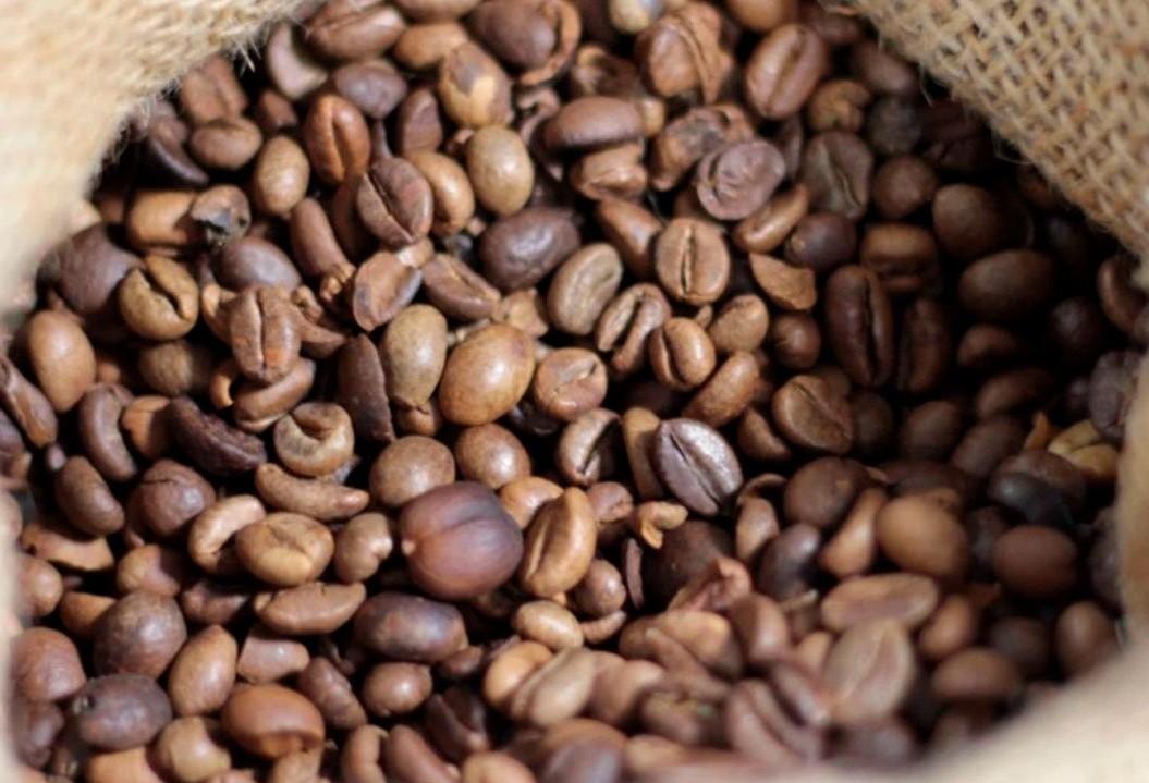 Safra de café de 2019 já colhida é estimada em 50mi de sacas de 60Kg