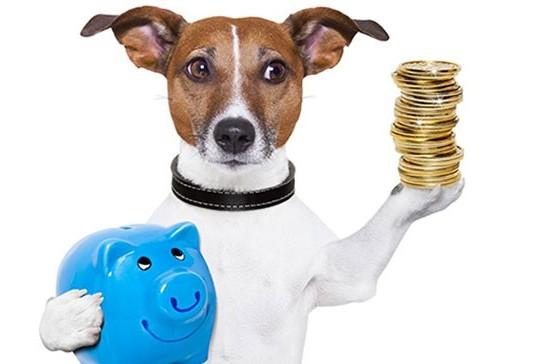 O promissor mercado pet é o assunto do programa