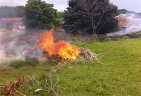 Queimadas irregulares geram R$ 10 mil em multas em Maringá